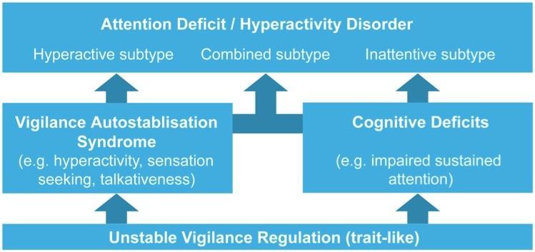 the ADHD vigilance model