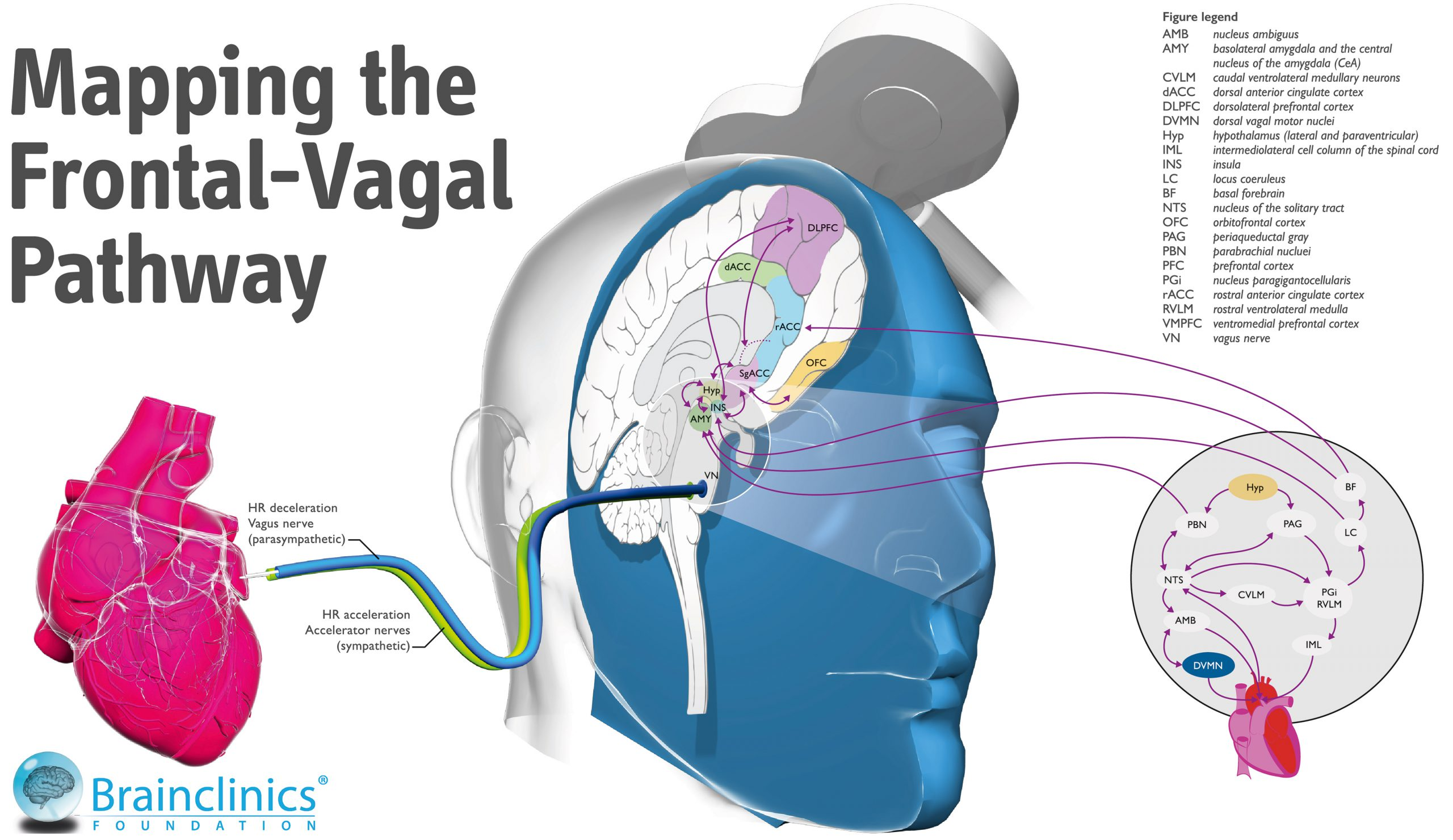 ADHD depression research, personalized medicine: mapping the frontal vagal pathway ncg-tms